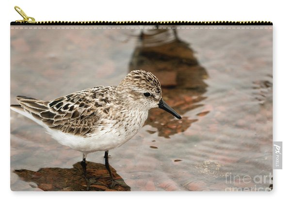 A Semipalmated Sandpiper Carry-all Pouch