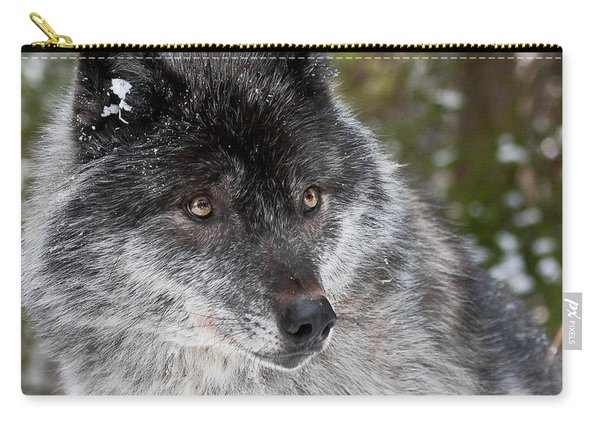 Shy II Carry-all Pouch