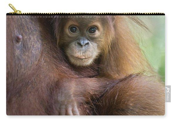 Sumatran Orangutan 9 Month Old Baby Carry-all Pouch