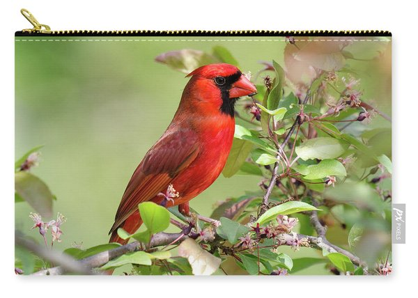 Summer Cardinal Carry-all Pouch