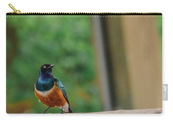 Superb Starling Carry-all Pouch