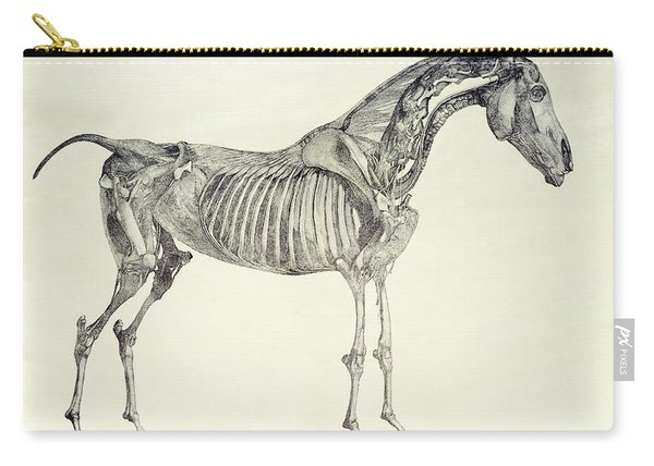 The Anatomy Of The Horse Carry-all Pouch