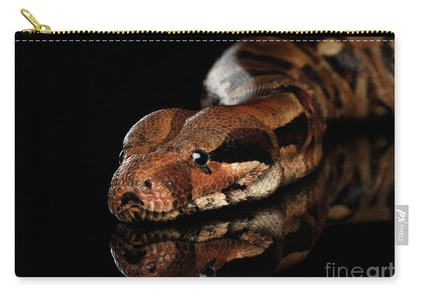 The Boa Constrictors, Isolated On Black Background Carry-all Pouch