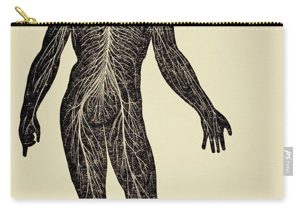 The Human Nervous System. From Virtue S Carry-all Pouch