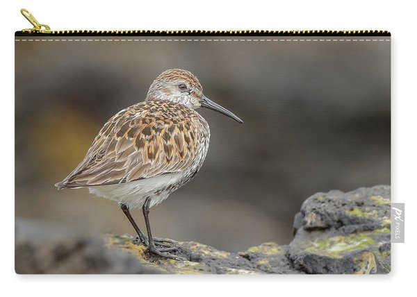 This Dunlin Rocks Carry-all Pouch