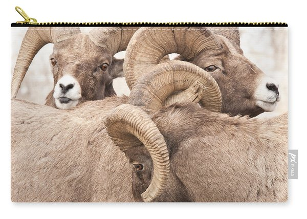 Three Bighorn Rams Carry-all Pouch