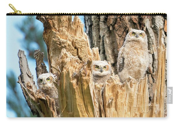 Three Great Horned Owl Babies Carry-all Pouch