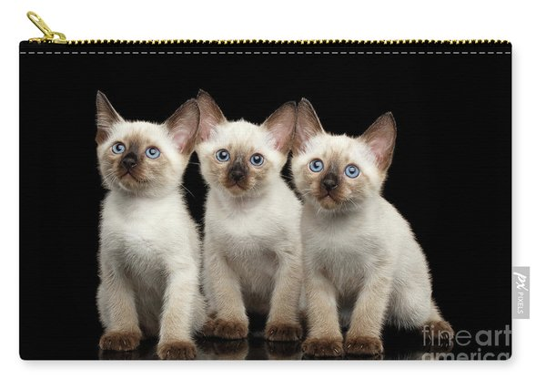Three Kitty Of Breed Mekong Bobtail On Black Background Carry-all Pouch