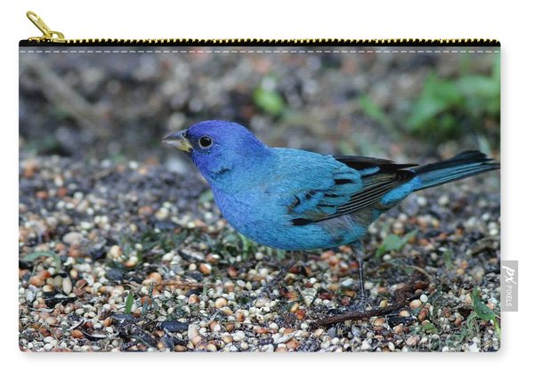 Tiny Indigo Bunting Carry-all Pouch