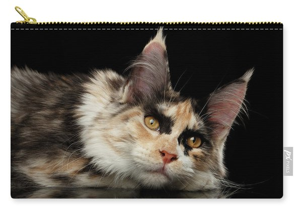 Tired Maine Coon Cat Lie On Black Background Carry-all Pouch