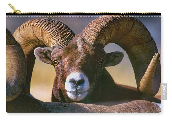 Trophy Bighorn Ram Carry-all Pouch