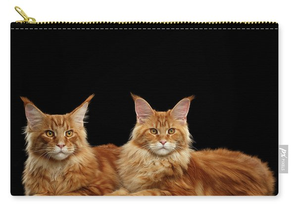 Two Ginger Maine Coon Cat On Black Carry-all Pouch