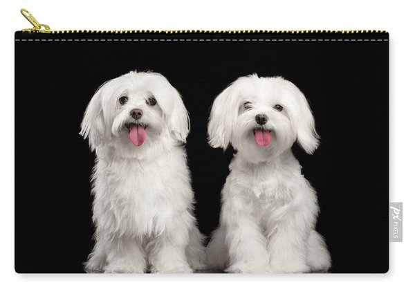 Carry-all Pouch featuring the photograph Two Happy White Maltese Dogs Sitting, Looking In Camera Isolated by Sergey Taran