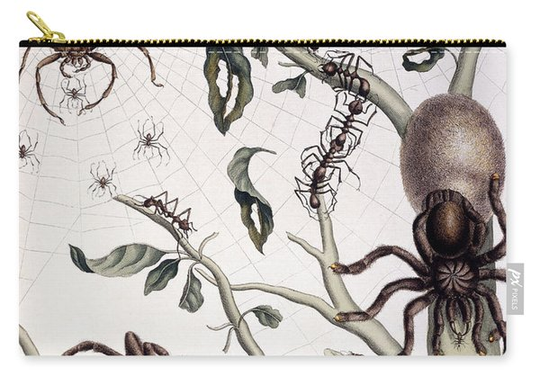 Various Arachnids From South America, 1726  Carry-all Pouch