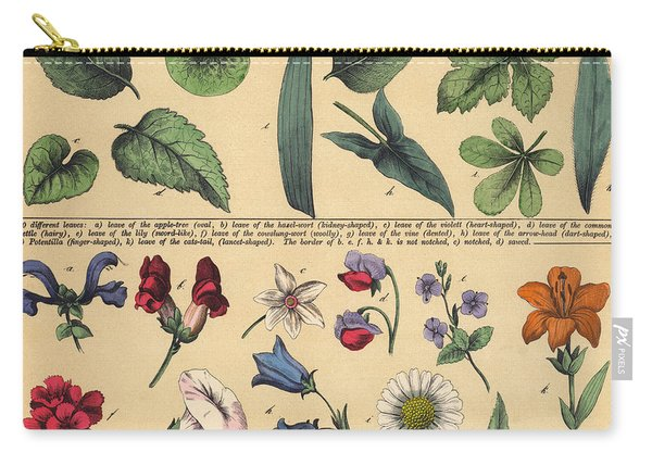 Vintage Botanical Print Showing Variety Of Leaves And Flowers Carry-all Pouch