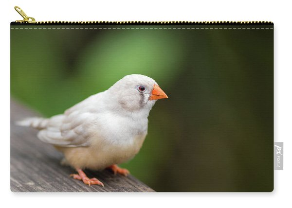 Carry-all Pouch featuring the photograph White Bird Standing On Deck by Raphael Lopez