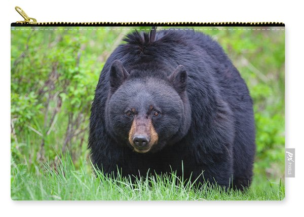 Wild Black Bear Carry-all Pouch