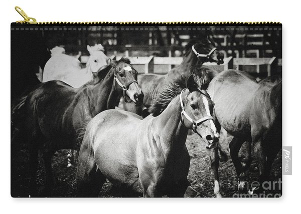 Young Horses On The Pasture Carry-all Pouch