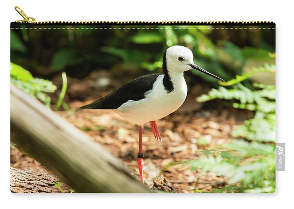 Carry-all Pouch featuring the photograph Black-winged Stilt by Rob D Imagery