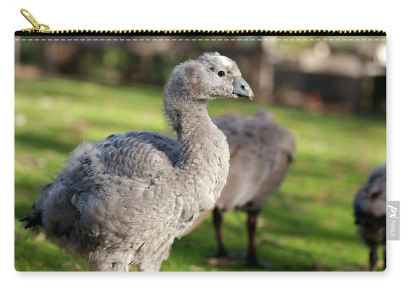 Carry-all Pouch featuring the photograph Cape Barren Goose And Geese by Rob D Imagery