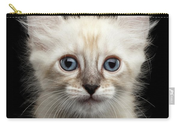 Mekong Bobtail Kitty With Blue Eyes On Isolated Black Background Carry-all Pouch