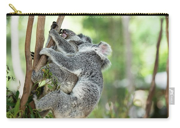 Carry-all Pouch featuring the photograph Australian Koalas by Rob D Imagery