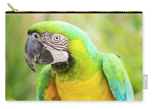 Carry-all Pouch featuring the photograph Beautiful Macaw Bird by Rob D Imagery