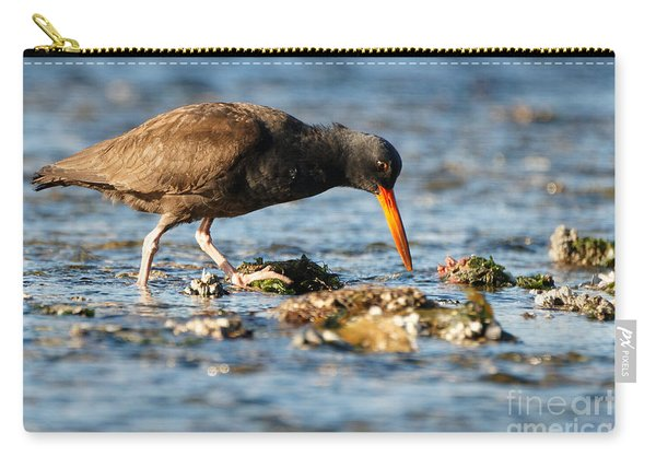 Black Oystercatcher Pacific Coast Carry-all Pouch