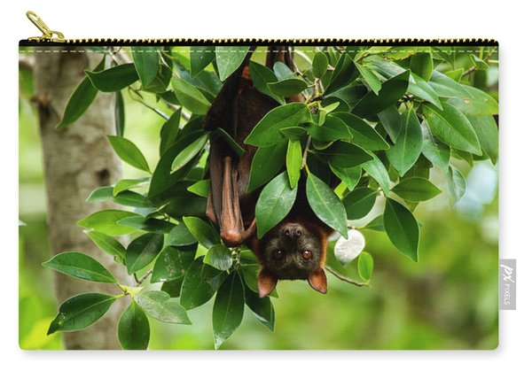 Carry-all Pouch featuring the photograph Flying Fox Bat by Rob D Imagery