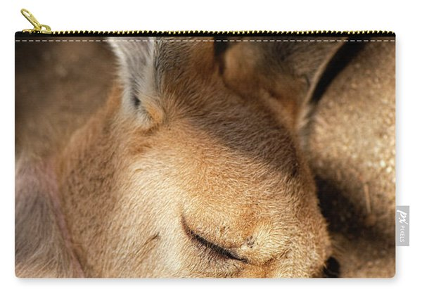 Carry-all Pouch featuring the photograph Kangaroo Joey by Rob D Imagery