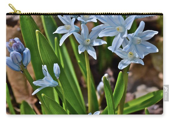 2019 Early April Striped Squill Carry-all Pouch