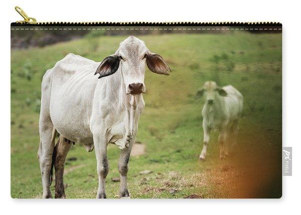 Carry-all Pouch featuring the photograph Australian Cow by Rob D Imagery