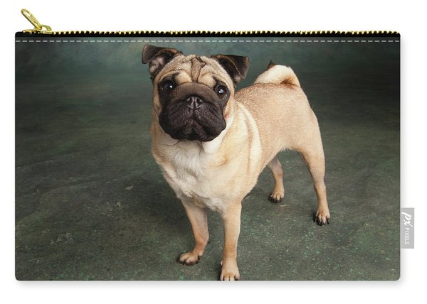 Portrait Of A Pug Mixed Dog Carry-all Pouch