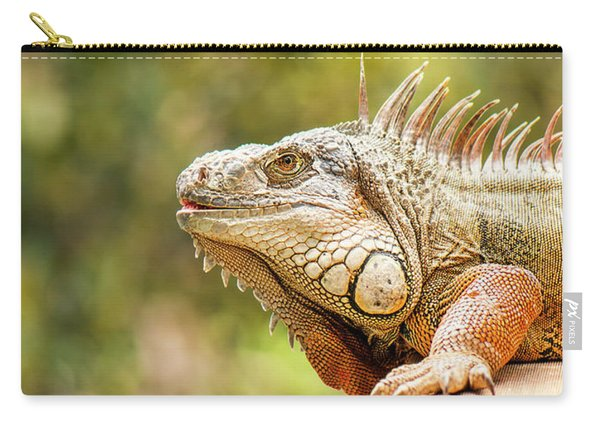 Carry-all Pouch featuring the photograph Green Iguana by Rob D Imagery