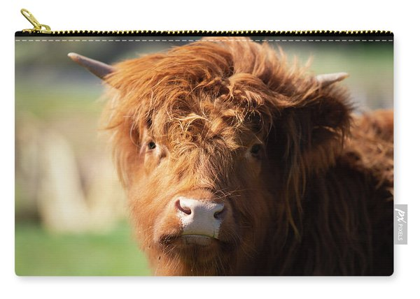 Carry-all Pouch featuring the photograph Highland Cow On The Farm by Rob D Imagery