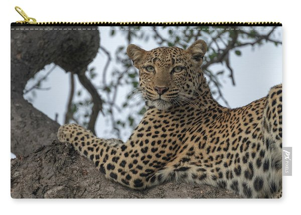 A Leopard Gazes From A Tree Carry-all Pouch