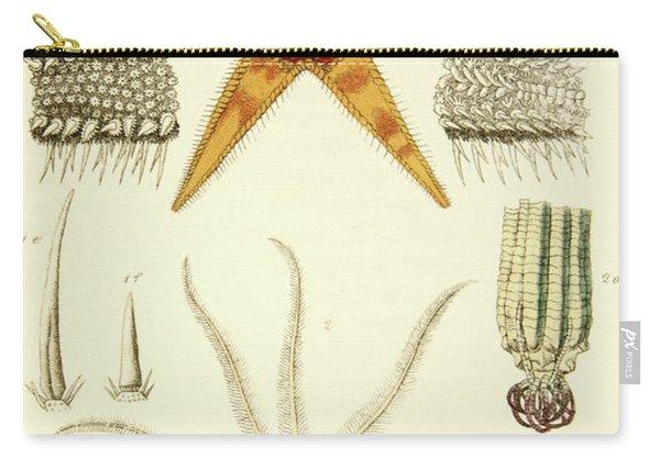 Asterias Aurantiaca And Comatula Carinata, From The Mollusca And Radiata Carry-all Pouch
