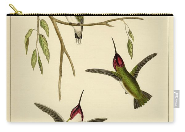 Atthis Costae Carry-all Pouch