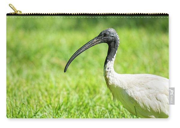 Carry-all Pouch featuring the photograph Australian White Ibis by Rob D Imagery