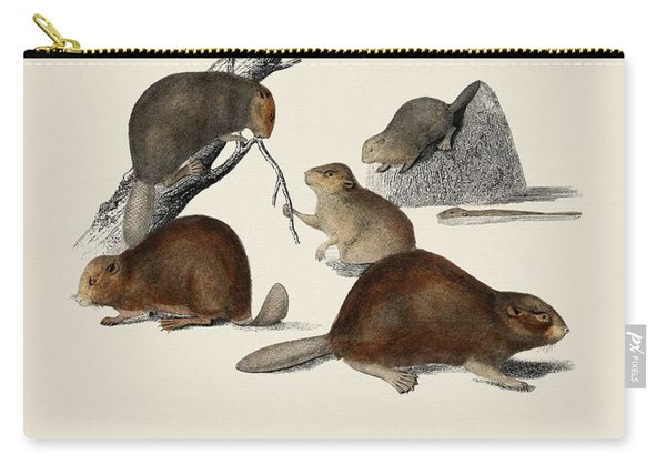 Beaver  Castor  Illustrated By Charles Dessalines D' Orbigny  1806-1876  Carry-all Pouch