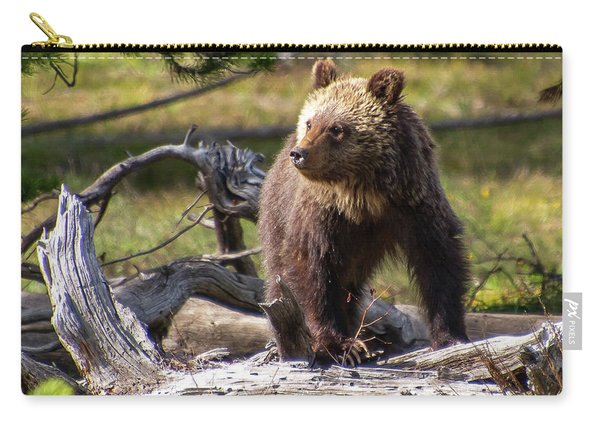Better View From Here Carry-all Pouch