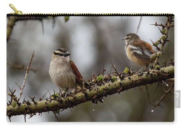 Black-crowned Tchagra And White-browed Scrub-robin Carry-all Pouch