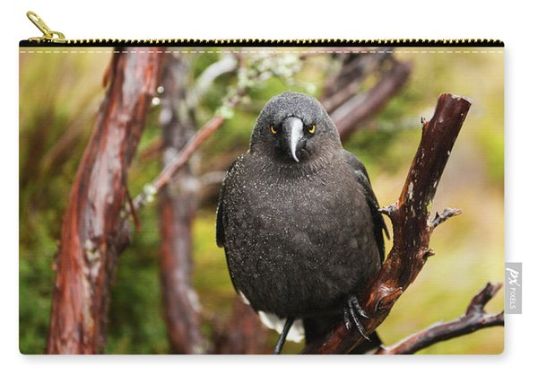 Black Currawong Carry-all Pouch