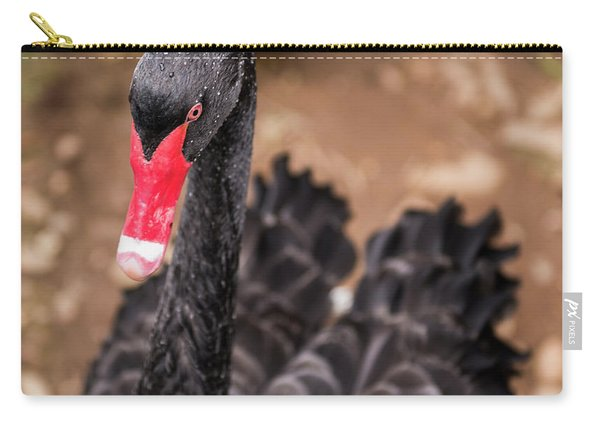 Carry-all Pouch featuring the photograph Black Swan by Rob D Imagery