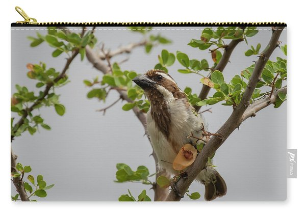 Black-throated Barbet Carry-all Pouch