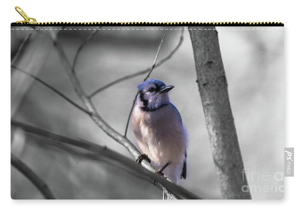 Carry-all Pouch featuring the photograph Blue Jay by Dheeraj Mutha