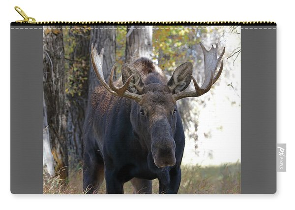 Carry-all Pouch featuring the photograph Bull Moose Approaching by Jean Clark