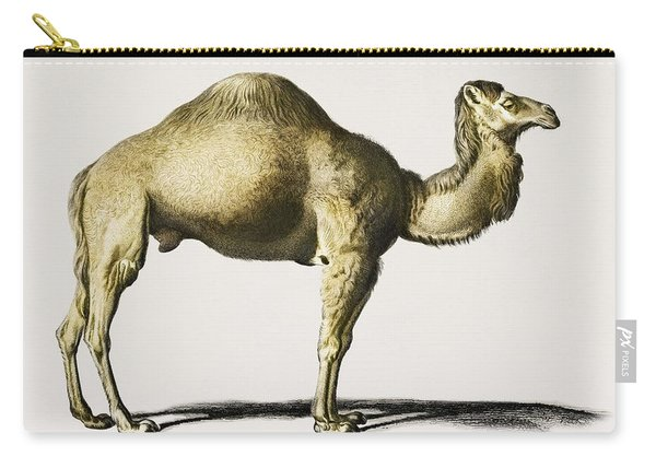 Camel  Camelus  Illustrated By Charles Dessalines D' Orbigny  1806-1876  Carry-all Pouch