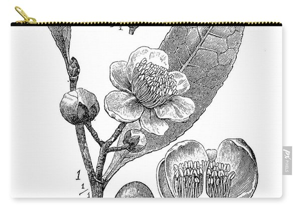 Camellia Sinensis, Botanical Vintage Engraving Carry-all Pouch