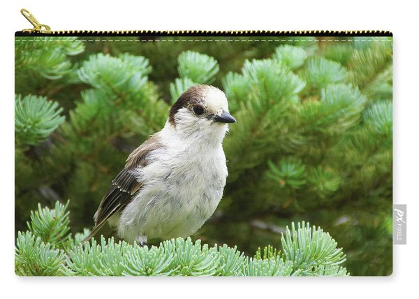 Camprobber - The Gray Jay Carry-all Pouch